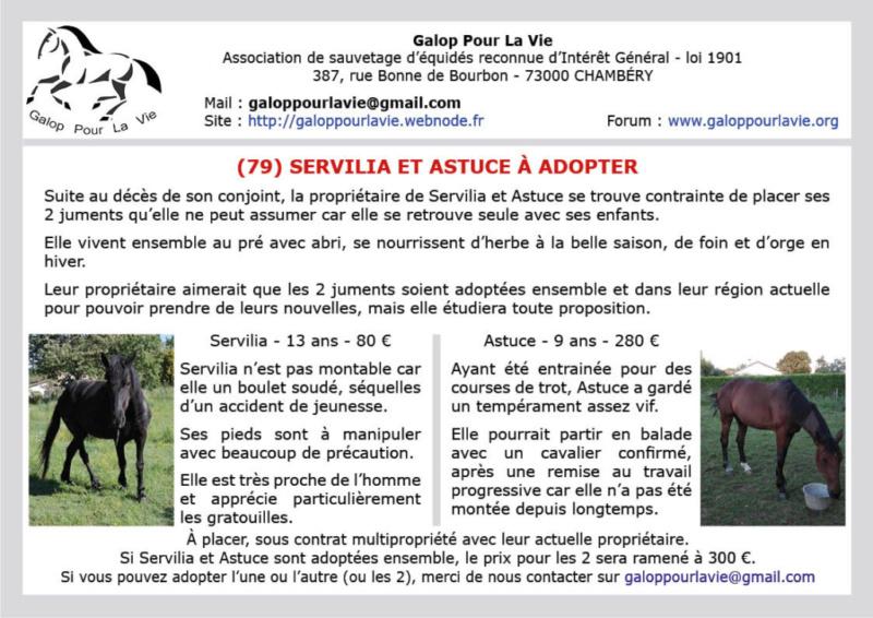 SERVILIA dite CRISTAL – ONC Selle née en 2006 – Adoptée en décembre 2019 par Albane   Servil10