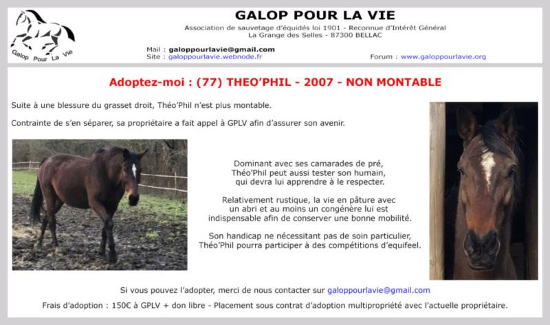 (77) THEO'PHIL - SFA né en 2007 - non montable  - 150 € à GPLV ou don libre supérieur   Theo_p10