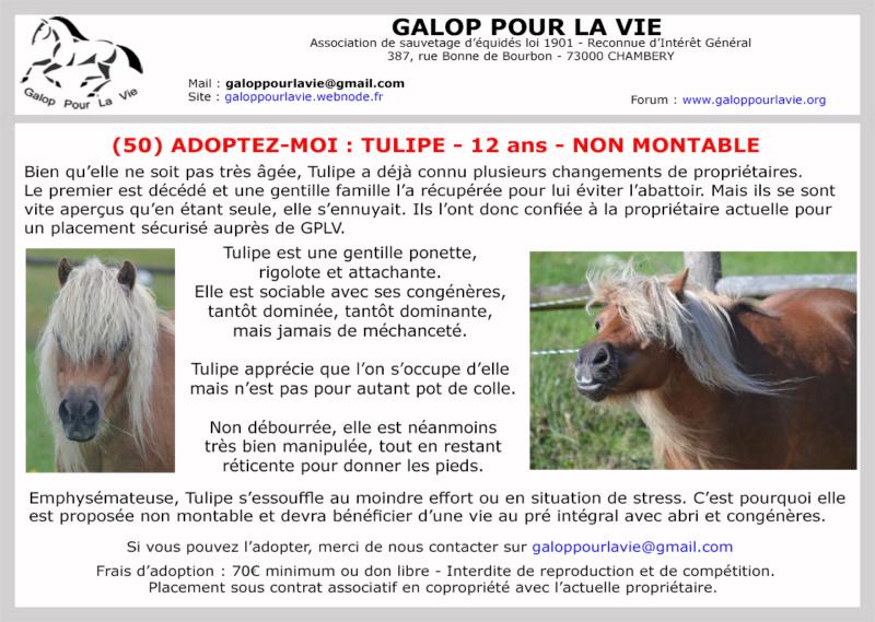 (50) TULIPE – Jument ONC Poney née en 2007  - non montable – 70 € + don libre à GPLV Tulipe11