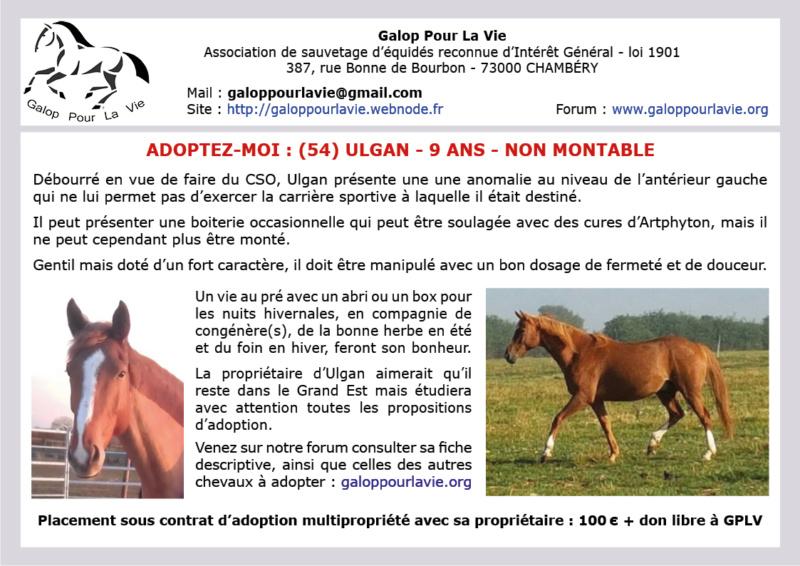 ULGAN – Cheval de Selle né en 2008 - Placé en janvier 2019 par sa propriétaire Ulgan_10