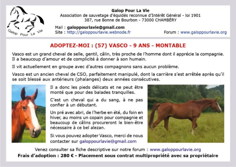 (57) VASCO – Hongre SF né en 2009 – Montable pour balades – 280 € + don libre à GPLV Vasco_10