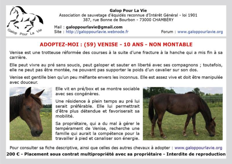 (Frontière Belgique & 59)  VENISE – Jument TF née en 2009 – non montable – 200 € + don libre à GPLV Venise20