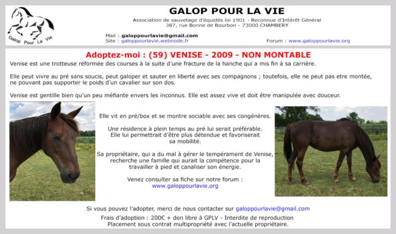 (Frontière Belgique & 59)  VENISE – Jument TF née en 2009 – non montable – 200 € + don libre à GPLV Venise21