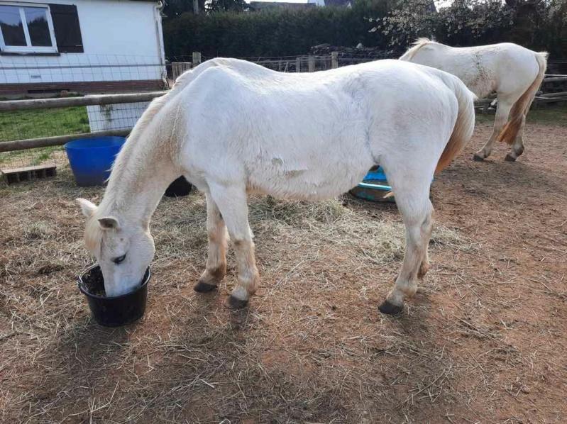 GRIBOUILLE - ONC poney né en 1994 - adopté en août 2009 par Carol Ann Z09_2011