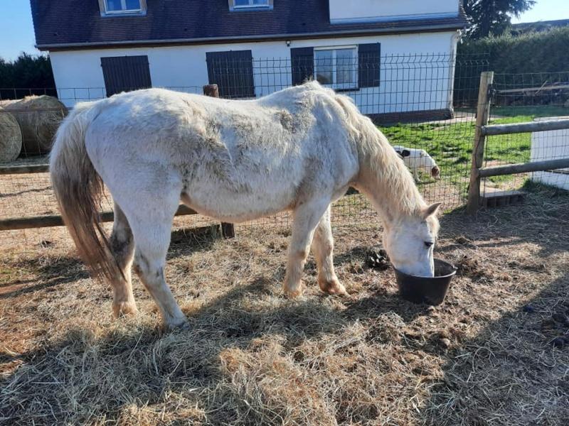 GRIBOUILLE - ONC poney né en 1994 - adopté en août 2009 par Carol Ann Z8_2_210