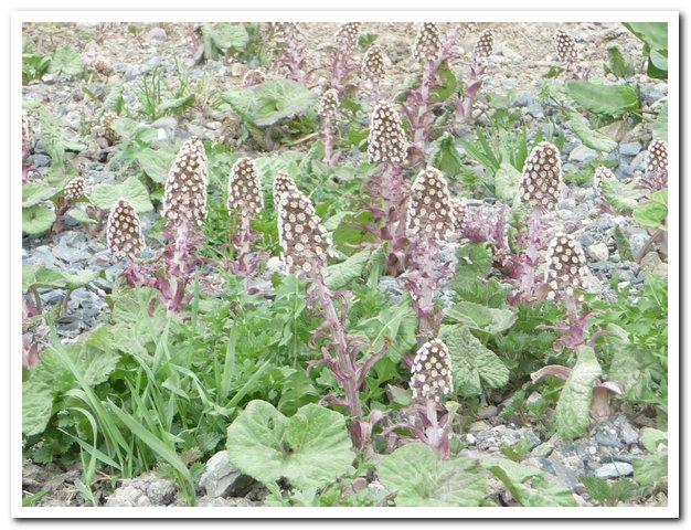 Evolution au jardin ! Alpes_12