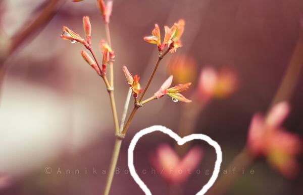 Spring is coming (?) :D Herz-c10