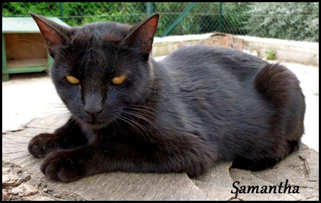 SAMANTHA superbe chatoune 10 mois P1000813