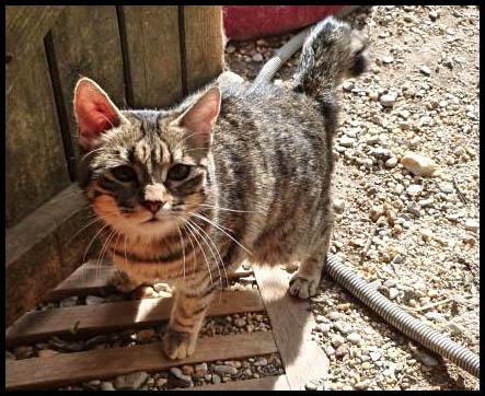 ILONA petite chatte très douce P1000910