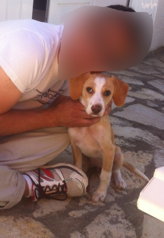 Chiot femelle xEpagneul 2 mois Photo12