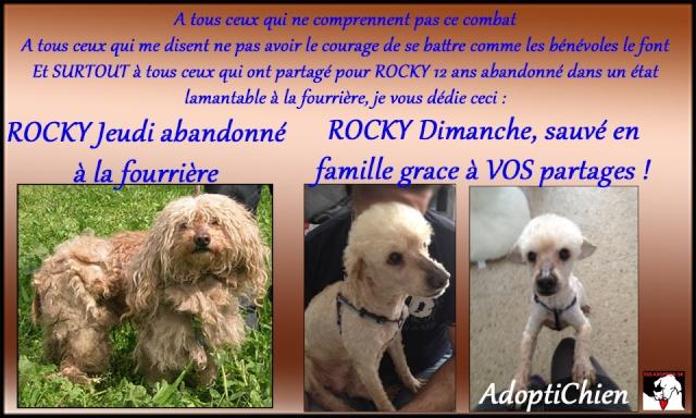 ROCKY Caniche 12 ans Sans_t10