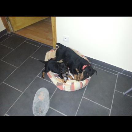 jeune chienne perdue 64157_12