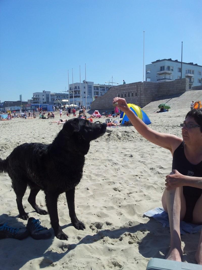 Photo de vos chiens à la plage! 2012-011