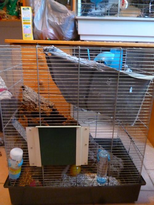 Nouvelle cage P1040826