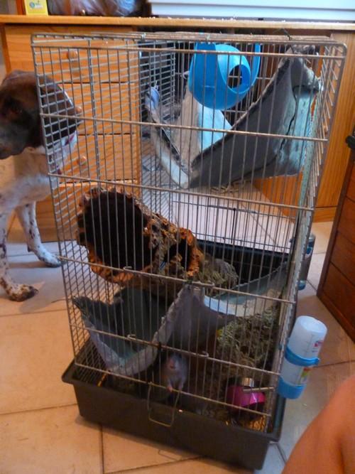 Nouvelle cage P1040827