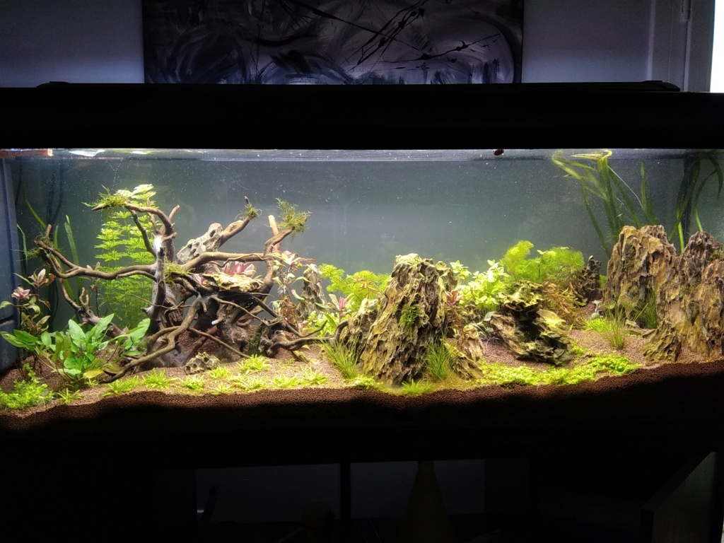 300l brut aquascaping - Page 2 15750310