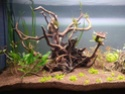 300l brut aquascaping 15734715