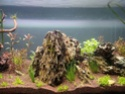 300l brut aquascaping 15734716