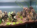 300l brut aquascaping 15734717