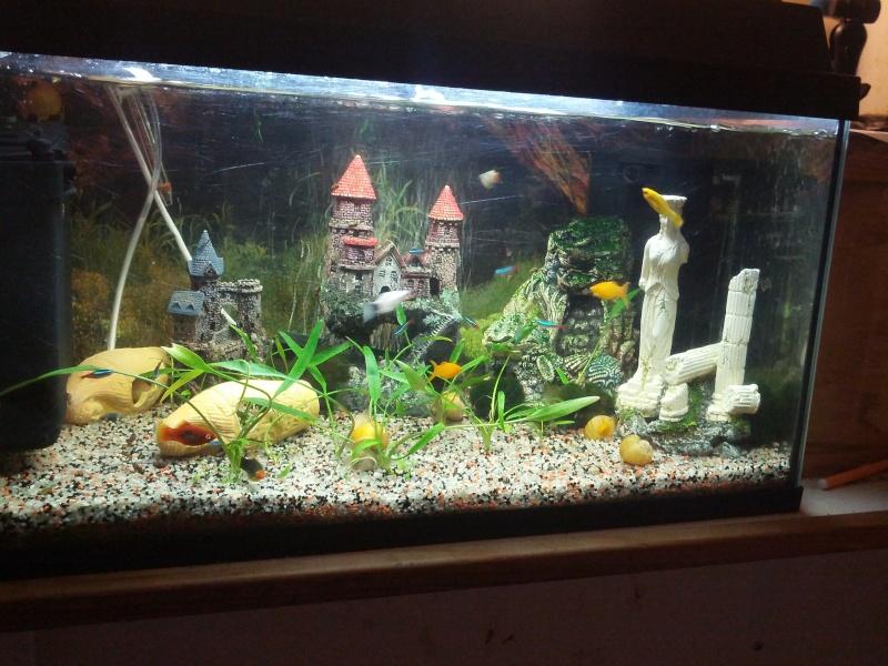 mes petits poissons  Img_2023