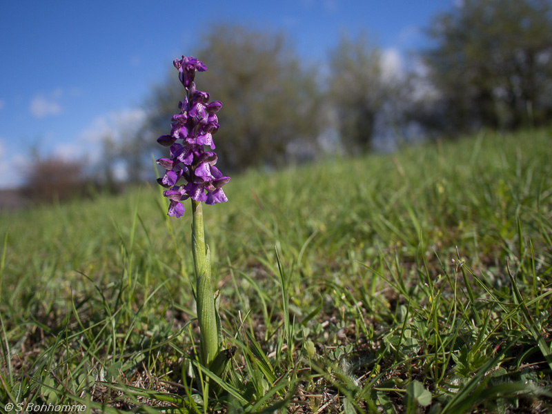 Orchidée gelée Herorc12