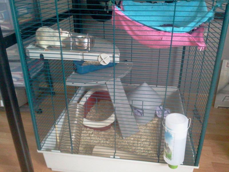 La cage de Emma, Flora et Rihanna :D 2013-010
