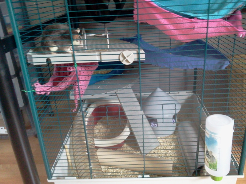 La cage de Emma, Flora et Rihanna :D 2013-013