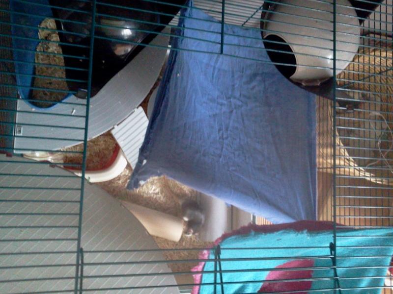 La cage de Emma, Flora et Rihanna :D 2013-019