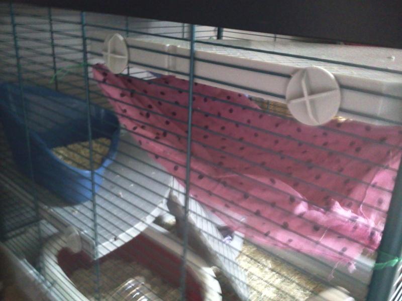 La cage de Emma, Flora et Rihanna :D 2013-020