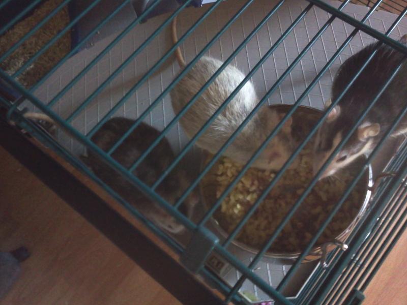 La cage de Emma, Flora et Rihanna :D 2013-021