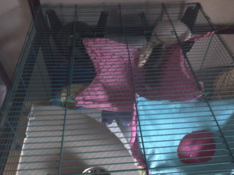 La cage de Emma, Flora et Rihanna :D 2013-024