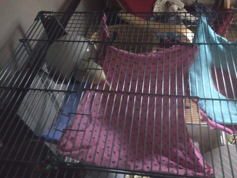 La cage de Emma, Flora et Rihanna :D 2013-026