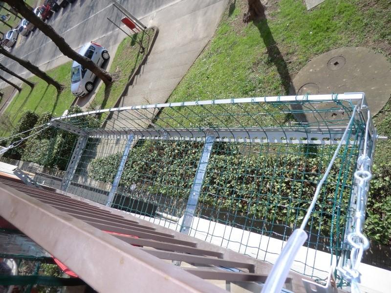 Chi ha bucato le foglie del mio ligustro? Bonsai11