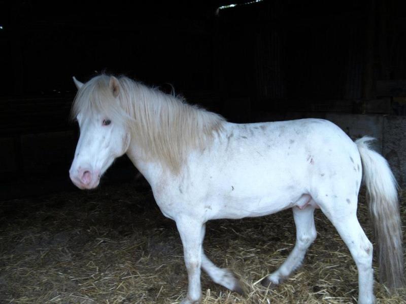 Petit nuage, poney, 2 ou 3 ans (76) 94293910