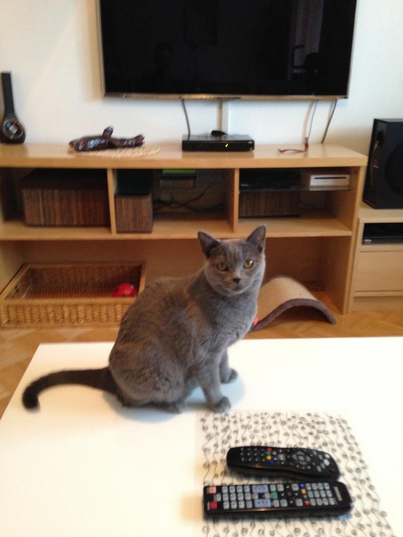 Katze 2013-018