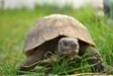 Identification de ma tortue Dsc_5913