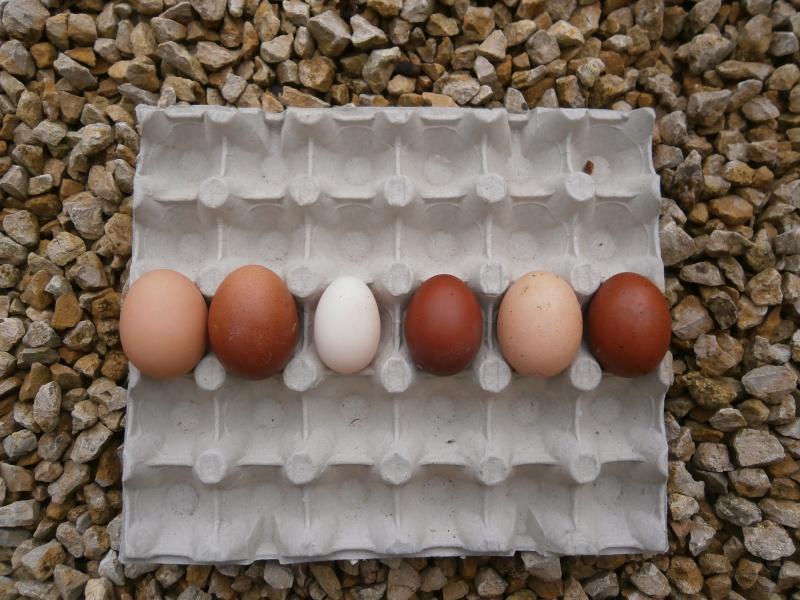 Des œufs normaux ! P5090011