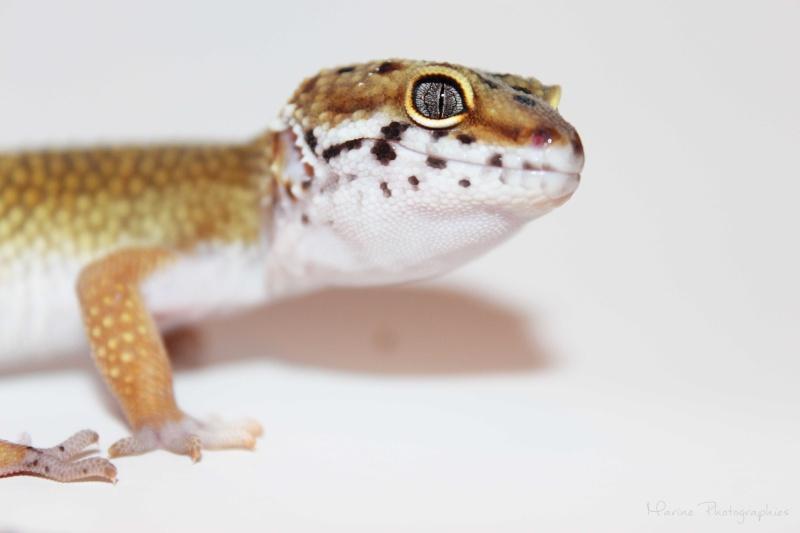 [Geckos Léopard] Krokmou, Mira et Pêche. Img_0310