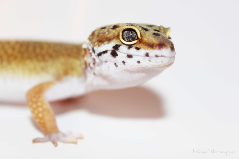 [Geckos Léopard] Krokmou, Mira et Pêche. Img_0312
