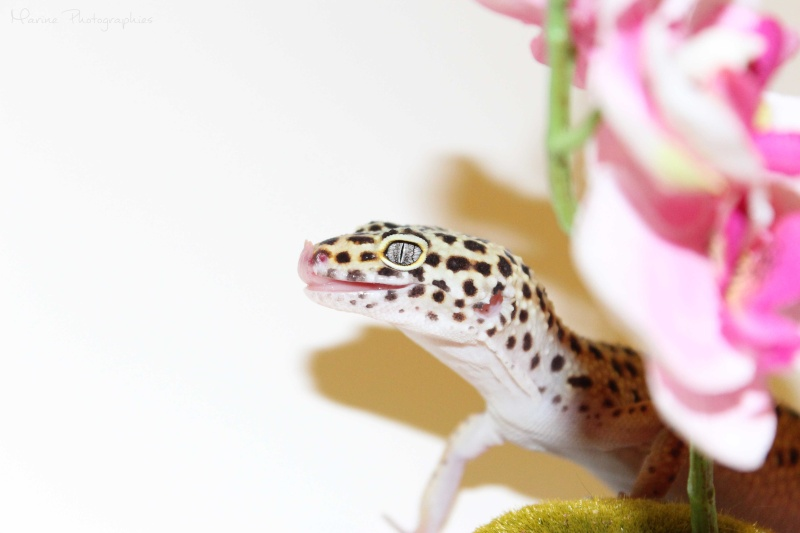 [Geckos Léopard] Krokmou, Mira et Pêche. Img_0512