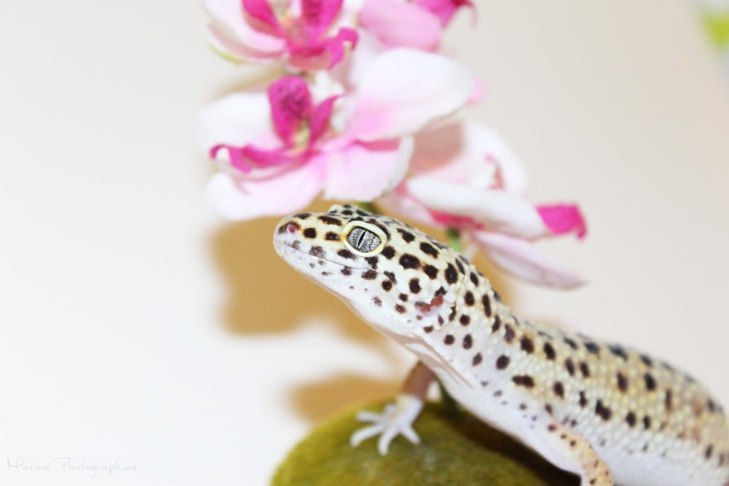 [Geckos Léopard] Krokmou, Mira et Pêche. Img_0513