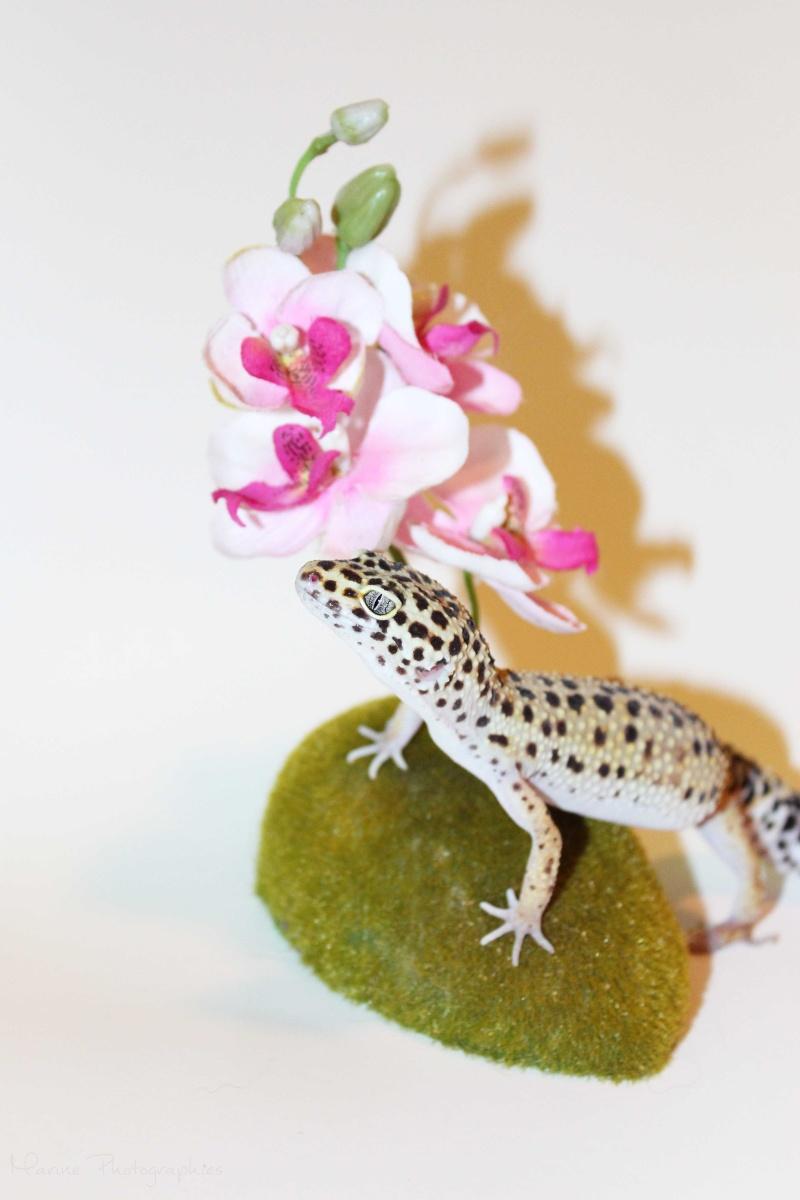 [Geckos Léopard] Krokmou, Mira et Pêche. Img_0514