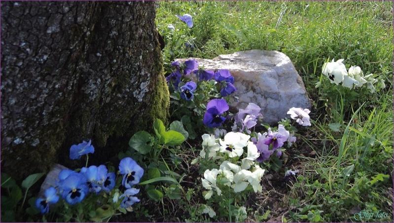 Mon jardin en fleur Mon_ja15