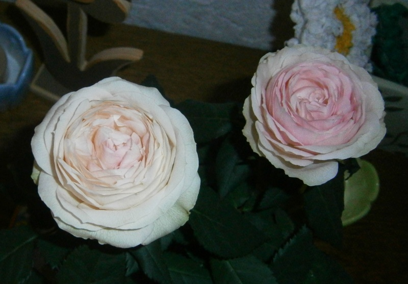 """Rosen - ein Thread für die """"Königin"""" Rosa_p10"""