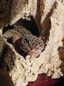 probleme avec geckos femelle de 4 ans ,Help please Xana10