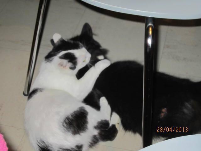 Violette - blanche et noire née en 2012 10029410