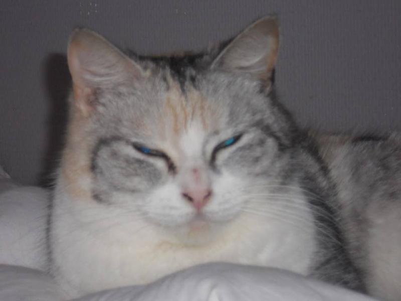 Helga - Magnifique minette trico aux couleurs originales - née le 01/01/2011 est adoptée dans le 80 10139510