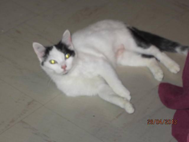 Violette - blanche et noire née en 2012 10165110