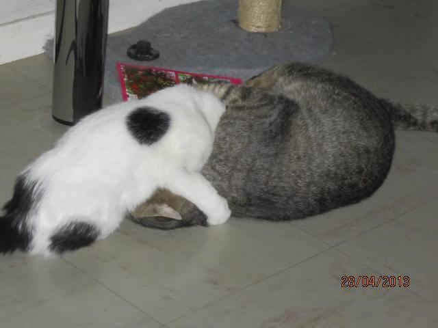 Violette - blanche et noire née en 2012 21335_10