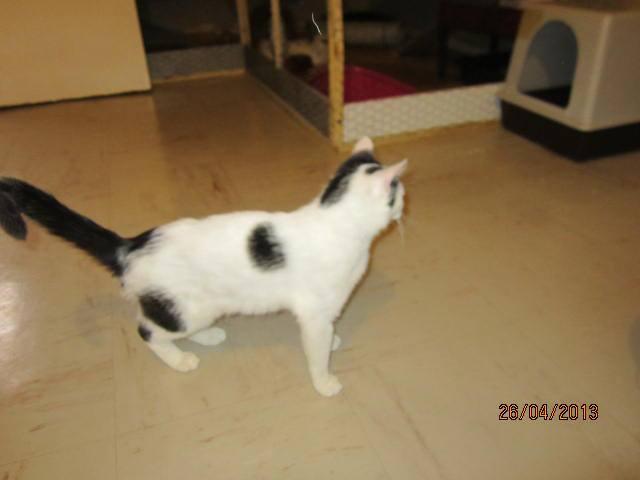 Violette - blanche et noire née en 2012 6459_610